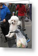 Doggie In The Basket Greeting Card