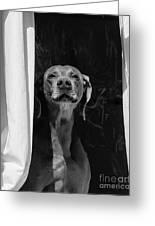 Doggie In The Window Greeting Card
