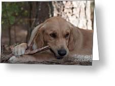 Doggy Heaven Greeting Card