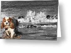 Dogs Enjoying The Sea Greeting Card by Jo Collins