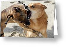 Dogs Fight On The Beach In Emerald Greeting Card