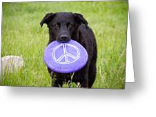 Dogs For Peace Greeting Card