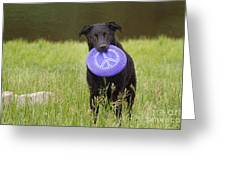Dogs For Peace Too Greeting Card