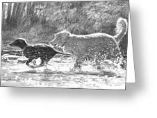 Dogs In A Stream Pencil Portrait Greeting Card