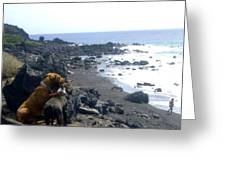 Dogs On The Beach Greeting Card