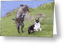 Dogs Playing With Stick Greeting Card