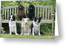 Dogs Sitting On Bench Greeting Card