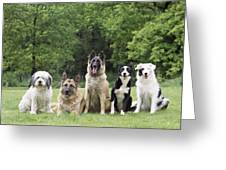 Dogs, Various Breeds In A Line Greeting Card