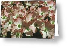 Dogwood 1 Greeting Card