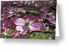 Dogwood  5576 Greeting Card
