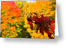 Dogwood And Fall Colors Greeting Card