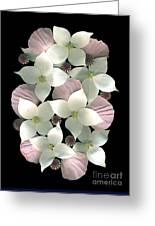 Dogwood And Poppies Greeting Card