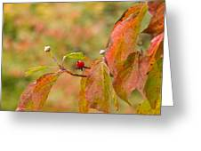 Dogwood Berrie Greeting Card