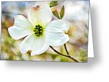Dogwood Blossom - Digital Paint I  Greeting Card