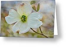 Dogwood Blossom Greeting Card
