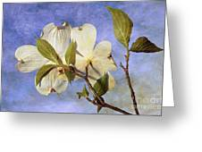 Dogwood Blossoms And Blue Sky - D007963-b Greeting Card