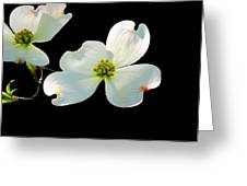 Dogwood Blossoms Painted For Jerry Greeting Card