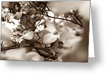 Dogwood Blossoms Greeting Card by Sharon Popek