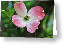 Dogwood Blosssom Greeting Card