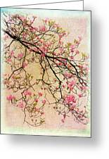 Dogwood Canvas 3 Greeting Card