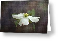 Dogwood Greeting Card by Cindy Rubin