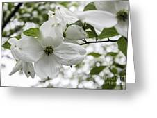 Dogwood Floret Greeting Card