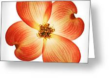 Dogwood Flower Greeting Card