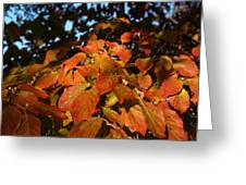 Dogwood In Autumn Colors Greeting Card