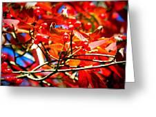 Dogwood In Autumn Greeting Card