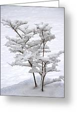 Dogwood In Snow Greeting Card