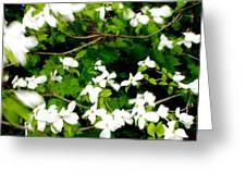 Dogwood In The Wind Greeting Card