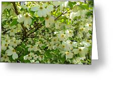 Dogwood Kissed By The Sun Greeting Card