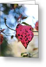 Dogwood Leaf - Red Leaf Falling With Watching Buds Greeting Card