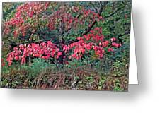 Dogwood Leaves In The Fall Greeting Card