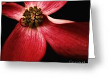 Dogwood Macro Greeting Card