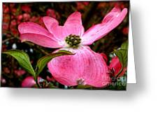 Dogwood Shows Pink Greeting Card
