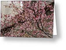 Dogwood Starting To Bloom Greeting Card