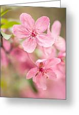 Dogwood Tree Bloom Close Up In Spring Greeting Card