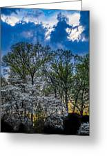 Dogwoods And Dramatic Sky Greeting Card