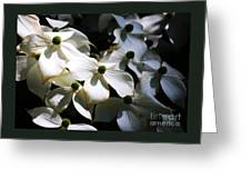 Dogwoods Caught In Central Park Greeting Card