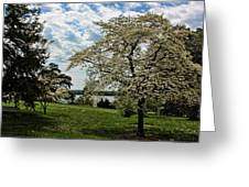 Dogwoods In Summer Greeting Card