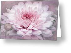 Dolled-up Dahlias Greeting Card