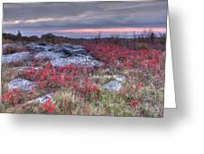 Dolly Sod Field Greeting Card