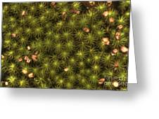 Dolly Sods Carpet Greeting Card