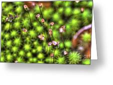Dolly Sods Ground Cover Greeting Card