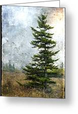 Dolly Sods Pine Greeting Card