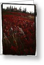 Dolly Sods Greeting Card