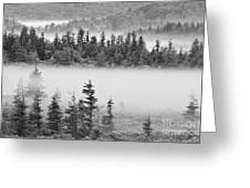 Dolly Sods Wilderness D300_10363_bw Greeting Card