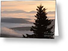 Dolly Sods Wilderness D300_18443 Greeting Card