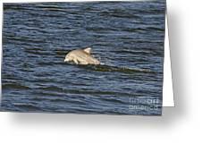 Dolphin At Sea Greeting Card